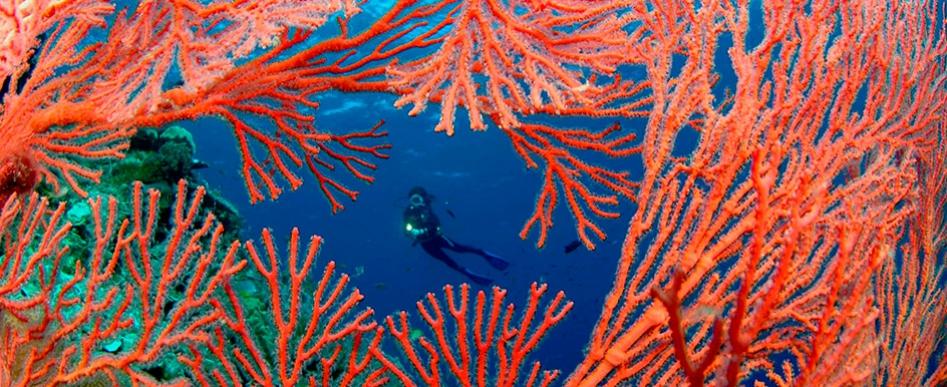 M.Y.OCEANIC